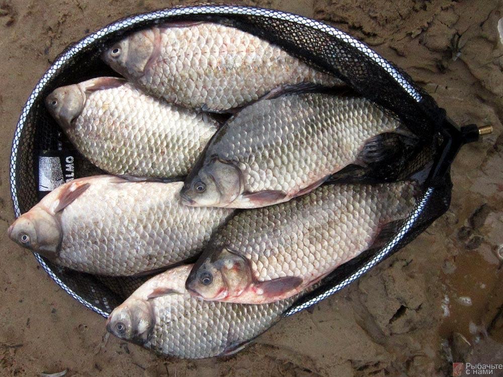 приснилось что ловил рыбу сачком